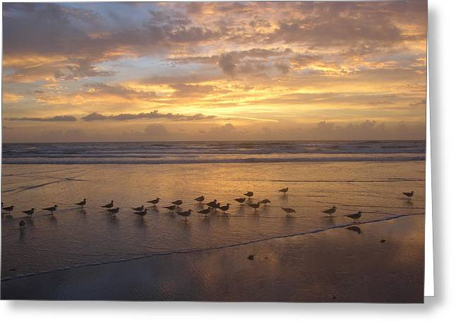 Seabirds Greeting Cards - Line of Seagulls Greeting Card by Julianne Felton
