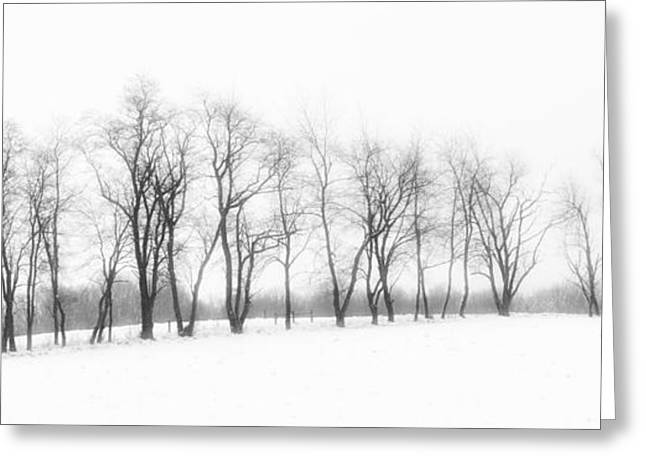 Snow Scenes Greeting Cards - Line of Trees Greeting Card by Kathy Jennings