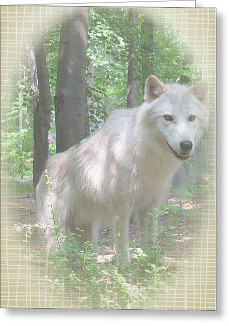 Wolf From The Forest Greeting Cards - Linen Wolf Pose Greeting Card by Debra     Vatalaro