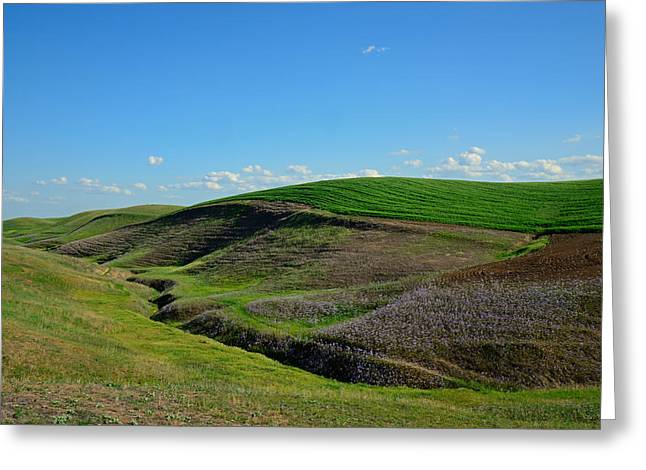 Winery Photography Greeting Cards - Lines and Shapes Greeting Card by Kathy Yates