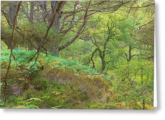 Breaking Rules Photographs Greeting Cards - Lines in the Green Greeting Card by Tim Haynes