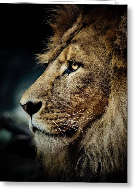 Lion Greeting Card by Animus Photography