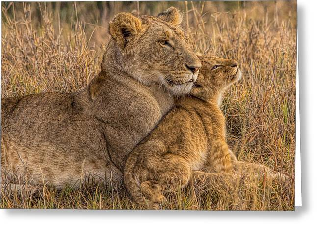 Animals Love Greeting Cards - Lion Baby with Mother Greeting Card by Henry Jager