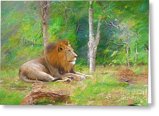 Lioness Greeting Cards - Lion Country Greeting Card by Judy Kay
