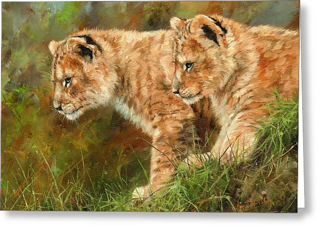 Lions Greeting Cards - Lion Cubs Greeting Card by David Stribbling
