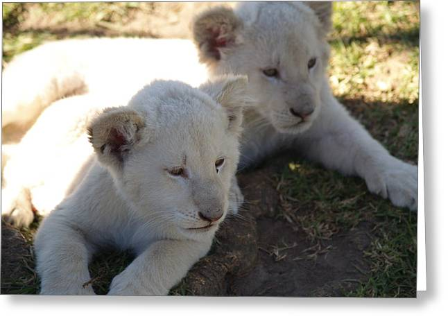 Lions Greeting Cards - Lion Cubs Greeting Card by Elizabeth  Snell