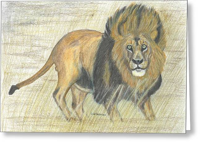 Wild Life Drawings Greeting Cards - Lion Greeting Card by Don  Gallacher