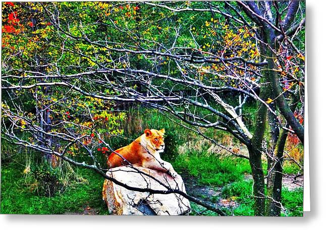 Animals Love Greeting Cards - Lion Enjoys The Autumn by Jasna Gopic Greeting Card by Jasna Gopic