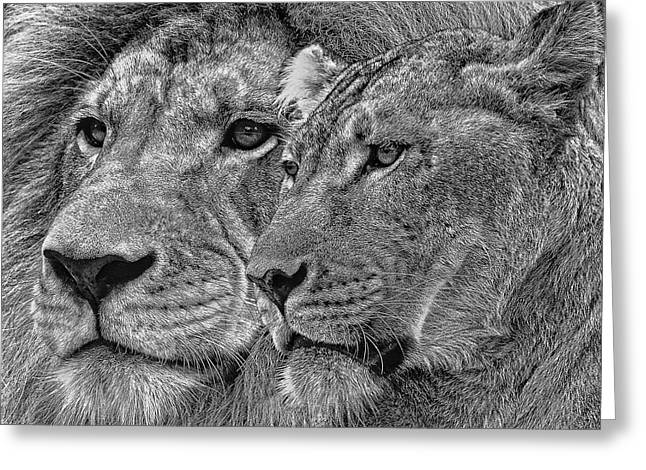 Lion King And Queen Greeting Card by Larry Linton