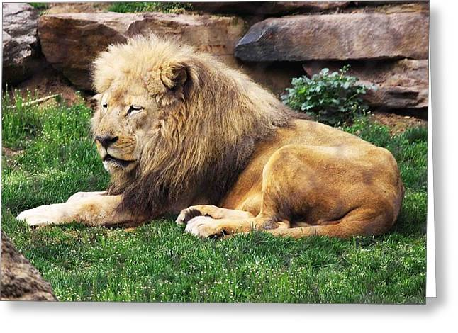 Love The Animal Greeting Cards - Lion King Greeting Card by Marlana Holsten