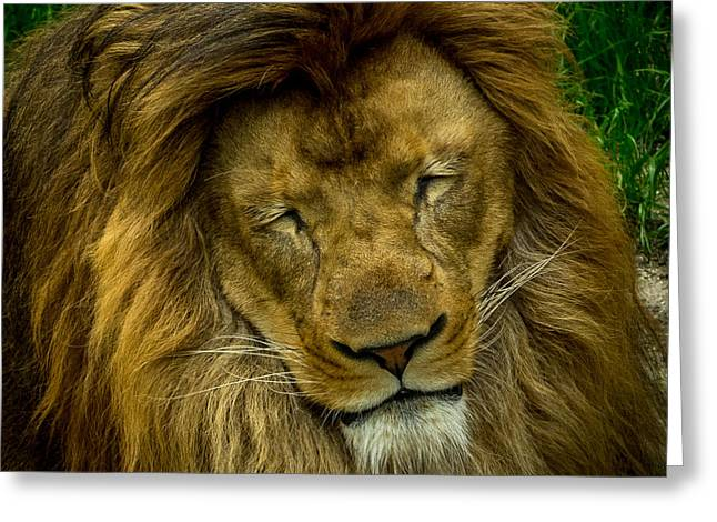 Lions Greeting Cards - Lion Greeting Card by Liang Li