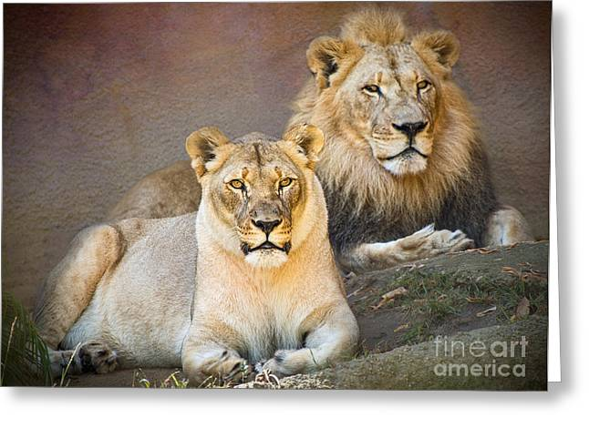 Lions Greeting Cards - Lion Pair Greeting Card by Jamie Pham