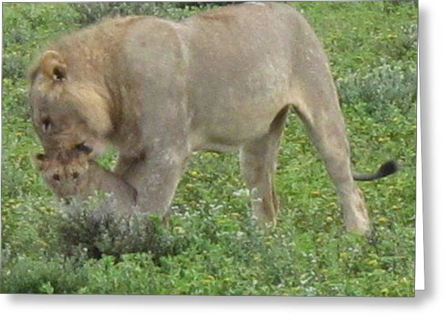 Lioness Greeting Cards - Lion Pride 3 Greeting Card by Cindy Kellogg