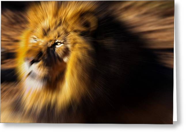 Lions Greeting Cards - Lion The King is Comming Greeting Card by Chris Flees