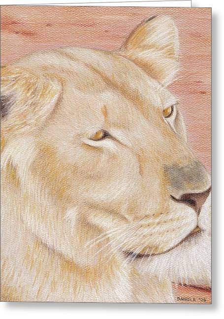 Lioness Drawings Greeting Cards - Lioness Greeting Card by Daniela   Rioux