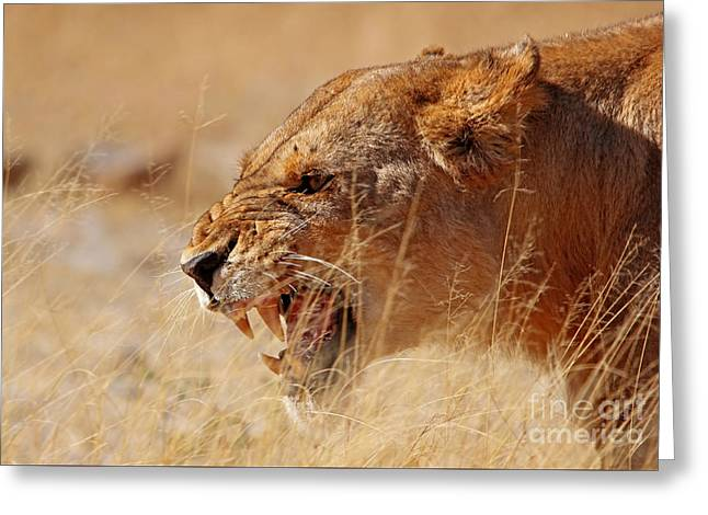 Lioness Greeting Cards - Lioness in Moremi Game Reserve, Botswana Greeting Card by Wibke W
