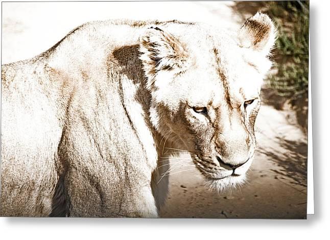 Lioness Greeting Cards - Lioness Greeting Card by Nicoll Vermeulen