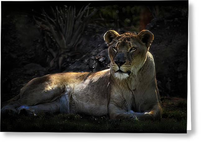 Lioness Greeting Cards - Lioness Greeting Card by Saija  Lehtonen