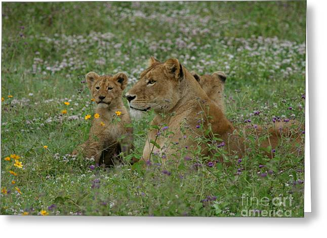 Lioness Greeting Cards - Lioness with Cubs Ngorongoro  Greeting Card by Joseph G Holland