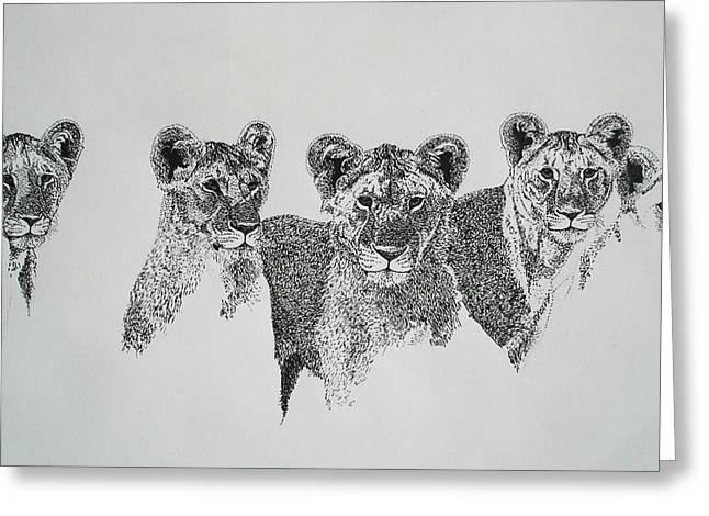 Lioness Drawings Greeting Cards - Lionesses  Greeting Card by Ryan Seate