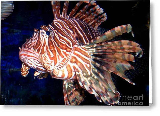 Decorative Fish Greeting Cards - Lionfish The Great Greeting Card by Valia Bradshaw