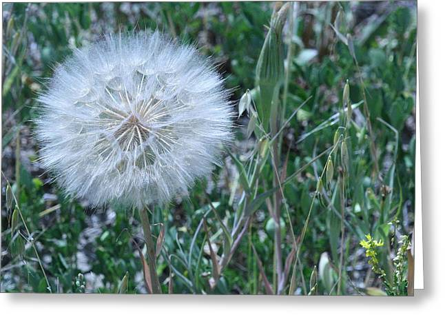 Angels Breath Greeting Cards - Lions Tooth Greeting Card by Mary Mikawoz