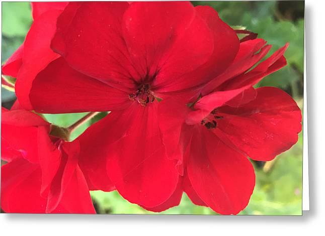 Red Geraniums Greeting Cards - Lipstick Greeting Card by Mara Stjames