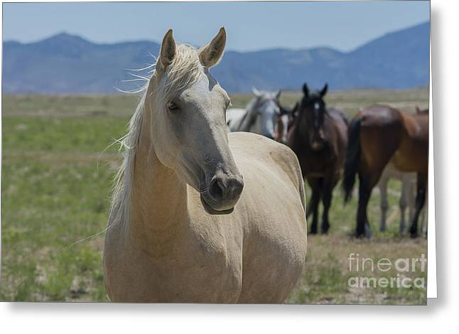 Wild Horse Pyrography Greeting Cards - Listening  Greeting Card by Nicole Markmann Nelson