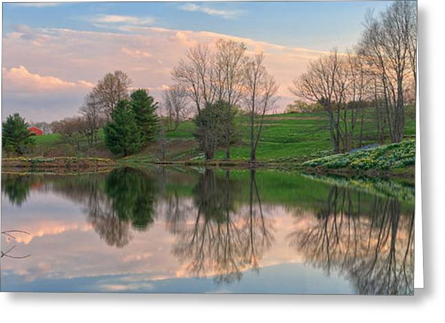 Litchfield Daffodils Panoramic Greeting Card by Bill Wakeley