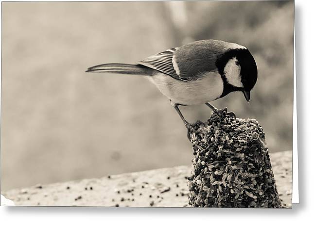 Feeding Birds Photographs Greeting Cards - Little Bird Feeding Greeting Card by Nomad Art And  Design