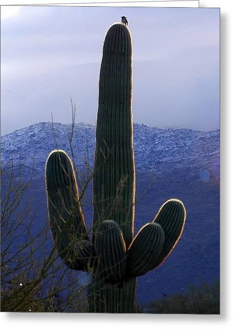 Rincon Greeting Cards - Little Bird on Saguaro Greeting Card by Teresa Stallings