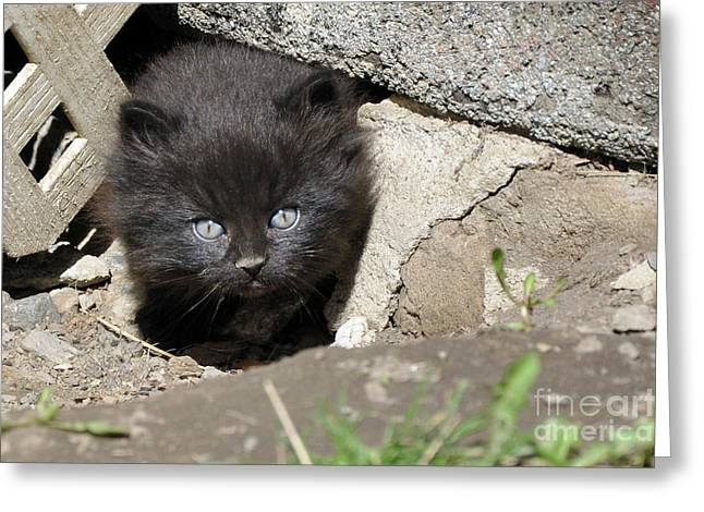 Kitty Kat Greeting Cards - Little Black Kitten Greeting Card by Reb Frost