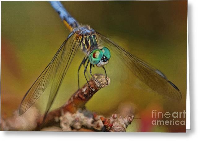 Damsel Fly Greeting Cards - Little Blue Damsel Greeting Card by Deborah Benoit