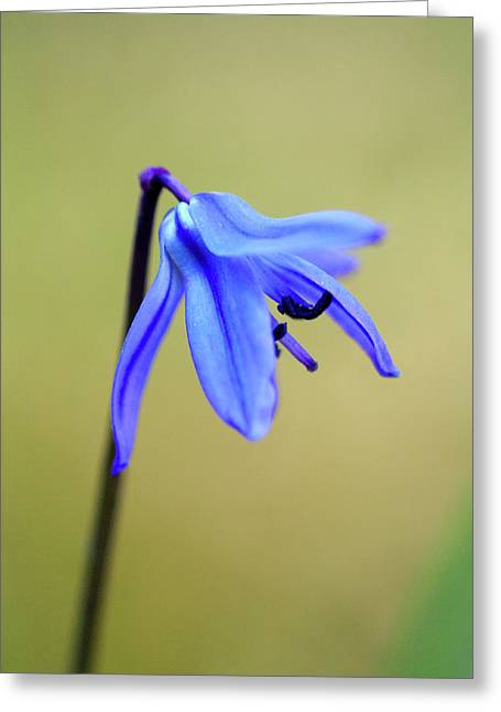Jouko Mikkola Greeting Cards - Little blue flower Greeting Card by Jouko Mikkola