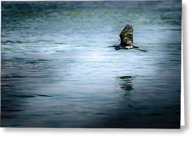 Hunting Bird Greeting Cards - Little blue heron Greeting Card by Gene Camarco