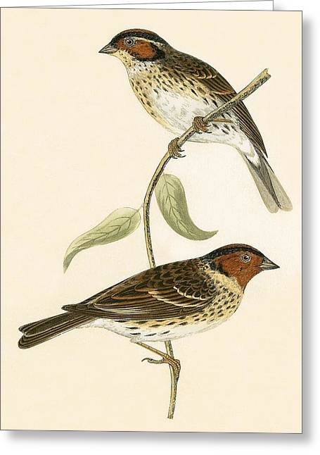 Little Bunting Greeting Card by English School