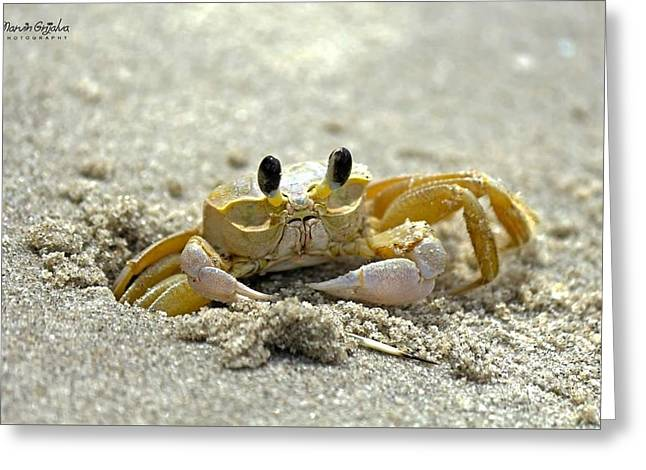 Civilization Pyrography Greeting Cards - Little Crab Greeting Card by Marvin Grijalva