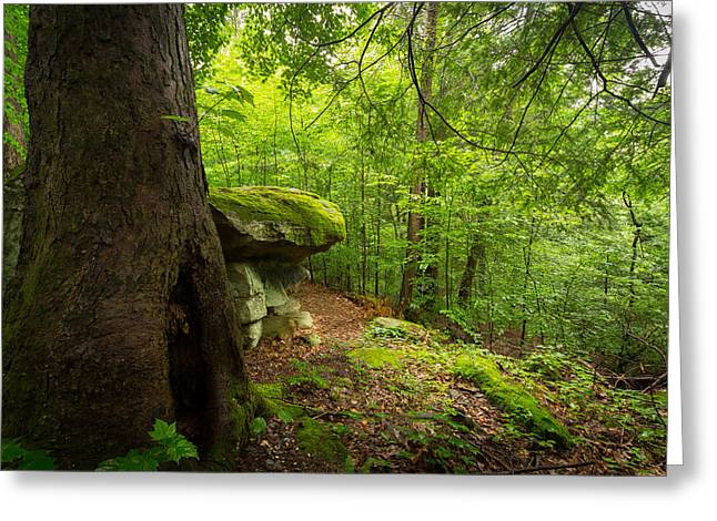 Nature Greeting Cards - Little Creek Park Greeting Card by Shane Holsclaw