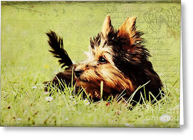 Little dog Greeting Card by Angela Doelling AD DESIGN Photo and PhotoArt