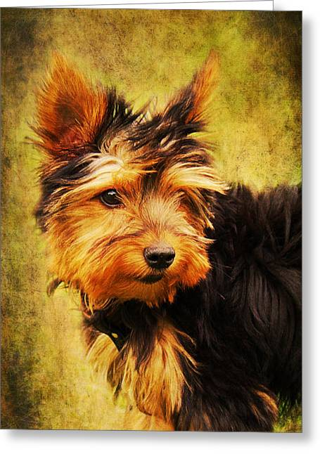 Puppies Mixed Media Greeting Cards - Little dog II Greeting Card by Angela Doelling AD DESIGN Photo and PhotoArt