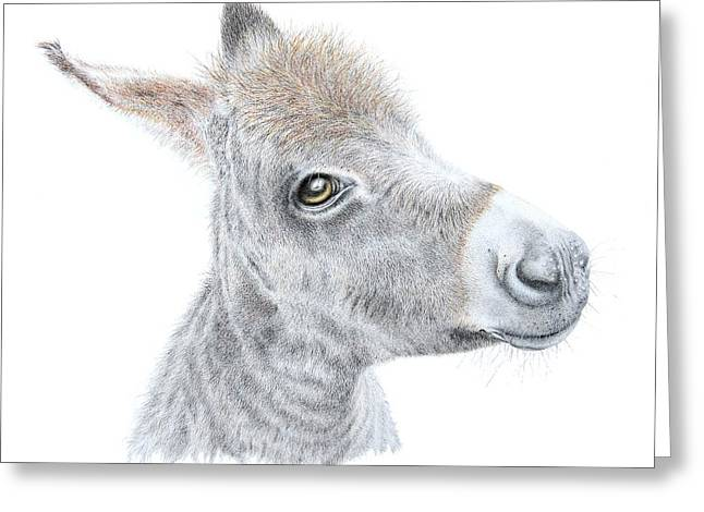 Donkeys Greeting Cards - Little Donket II Greeting Card by Sandra Moore