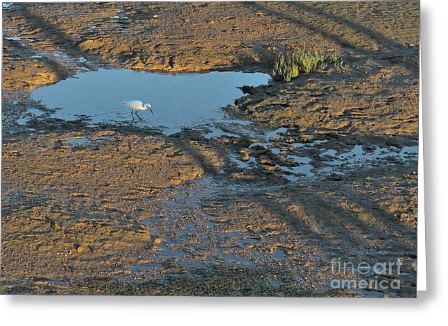 Little Egret In Ria Formosa Greeting Card by Angelo DeVal
