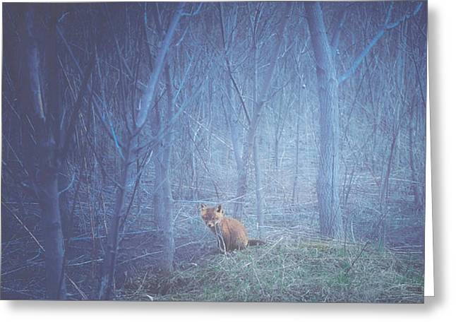 Little Fox In The Woods Greeting Card by Carrie Ann Grippo-Pike
