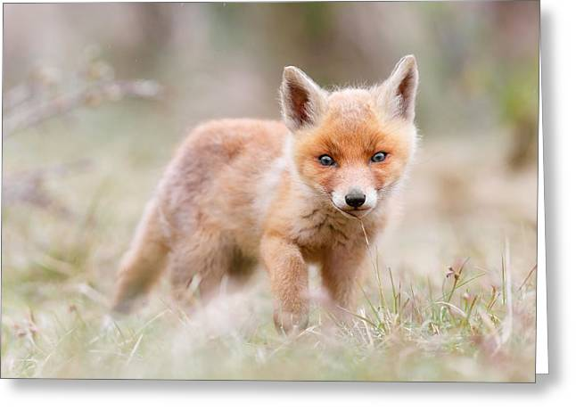 Little Fox Kit, Big World Greeting Card by Roeselien Raimond