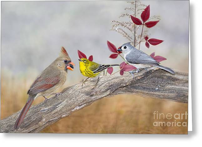 Female Northern Cardinal Greeting Cards - Little Gathering of Feathered Friends Greeting Card by Bonnie Barry