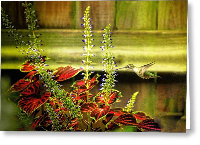 Hovering Greeting Cards - Little Hummer  Greeting Card by Olahs Photography