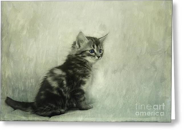 Little Kitty Greeting Card by Priska Wettstein