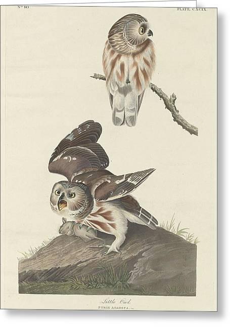 1793 Greeting Cards - Little Owl Greeting Card by John James Audubon