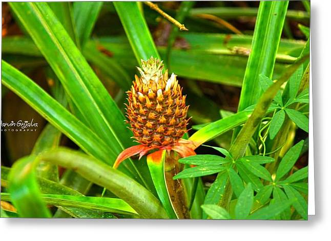Pineapple Pyrography Greeting Cards - little Pineapple Greeting Card by Marvin Grijalva