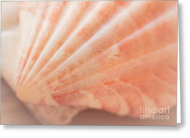 Pastel Pink Greeting Cards - Little Seashell Greeting Card by Ana V  Ramirez
